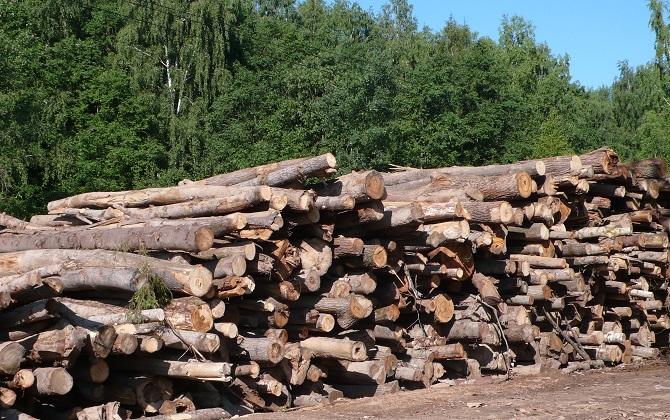 ОНФ просит наказать Росимущество за незаконную вырубку леса