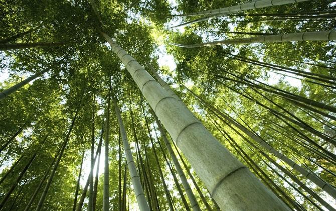 Тим Кук анонсировал экологические программы Apple в Китае