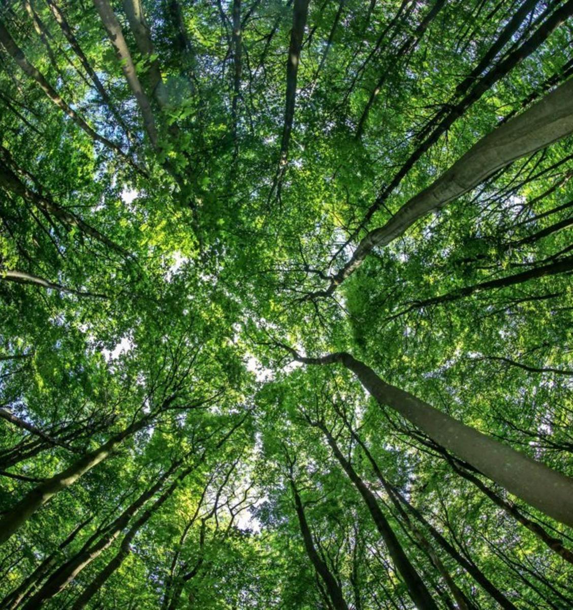 Стартовал всероссийский марафон «Сохраним леса страны»