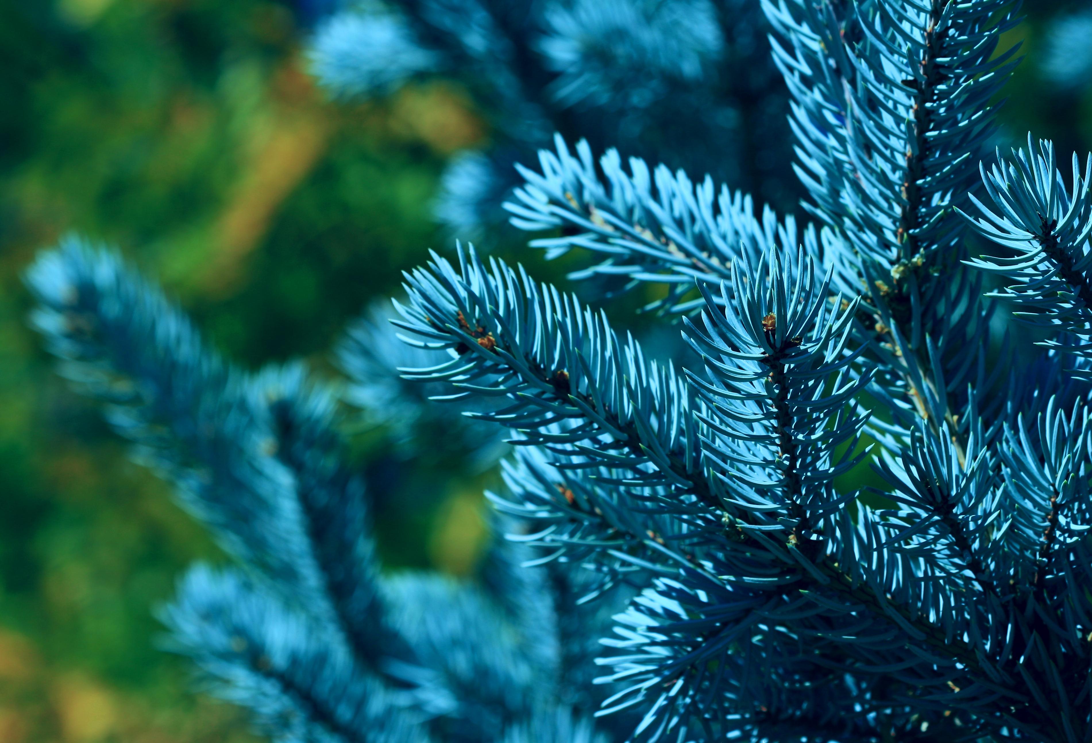 Макулатуру обменяют на саженцы деревьев