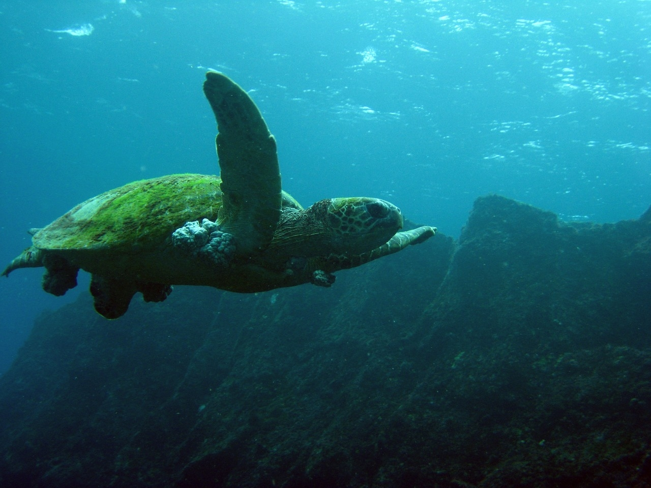 В Тихом океане создадут самый большой в мире морской заповедник