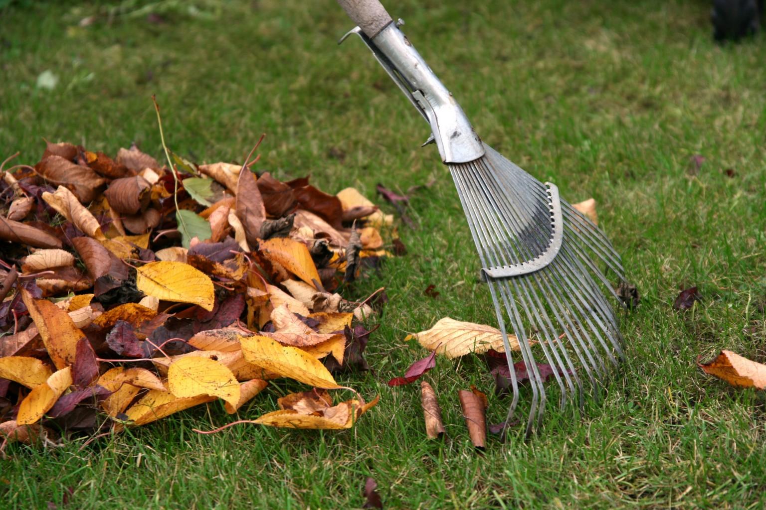 Как бороться с уборкой листвы во дворе и почему это важно