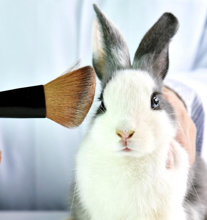 В Украине хотят запретить тестировать косметику на животных