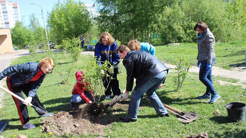 Больше миллиона саженцев деревьев посадят 29 апреля в Подмосковье