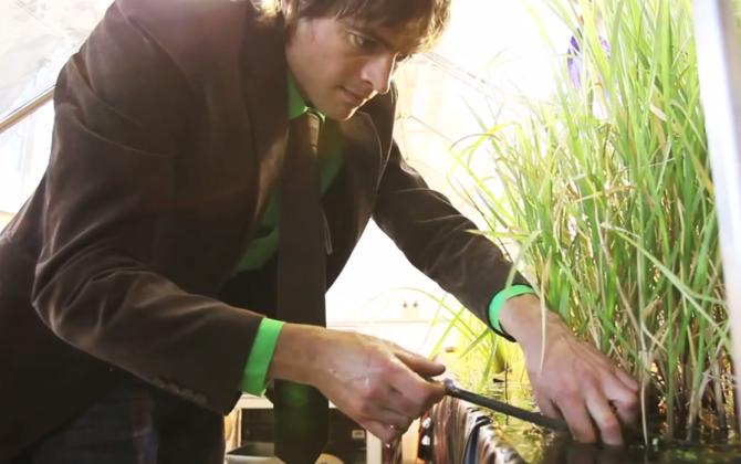 Голландцы генерируют электроэнергию из растений