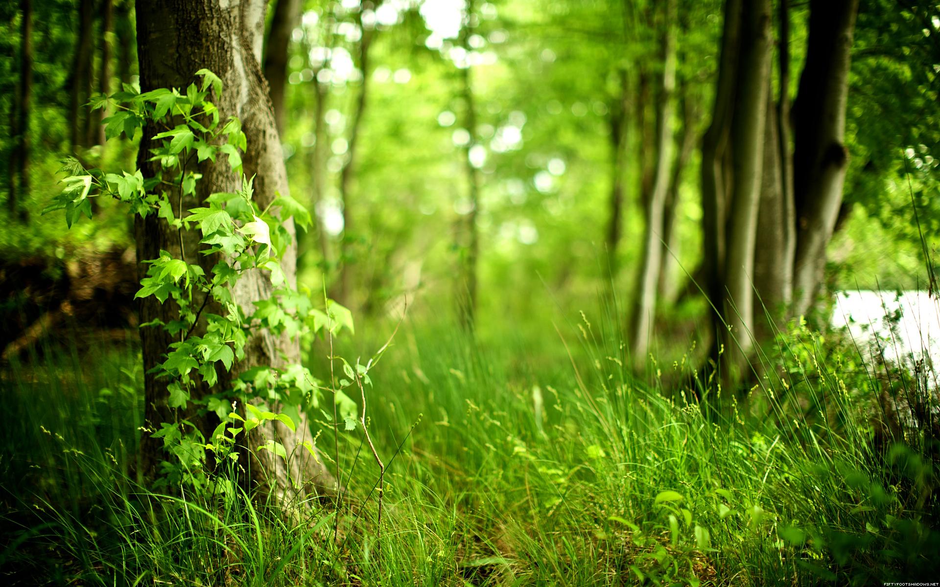 В Год экологии в России посадят 800 тысяч га леса