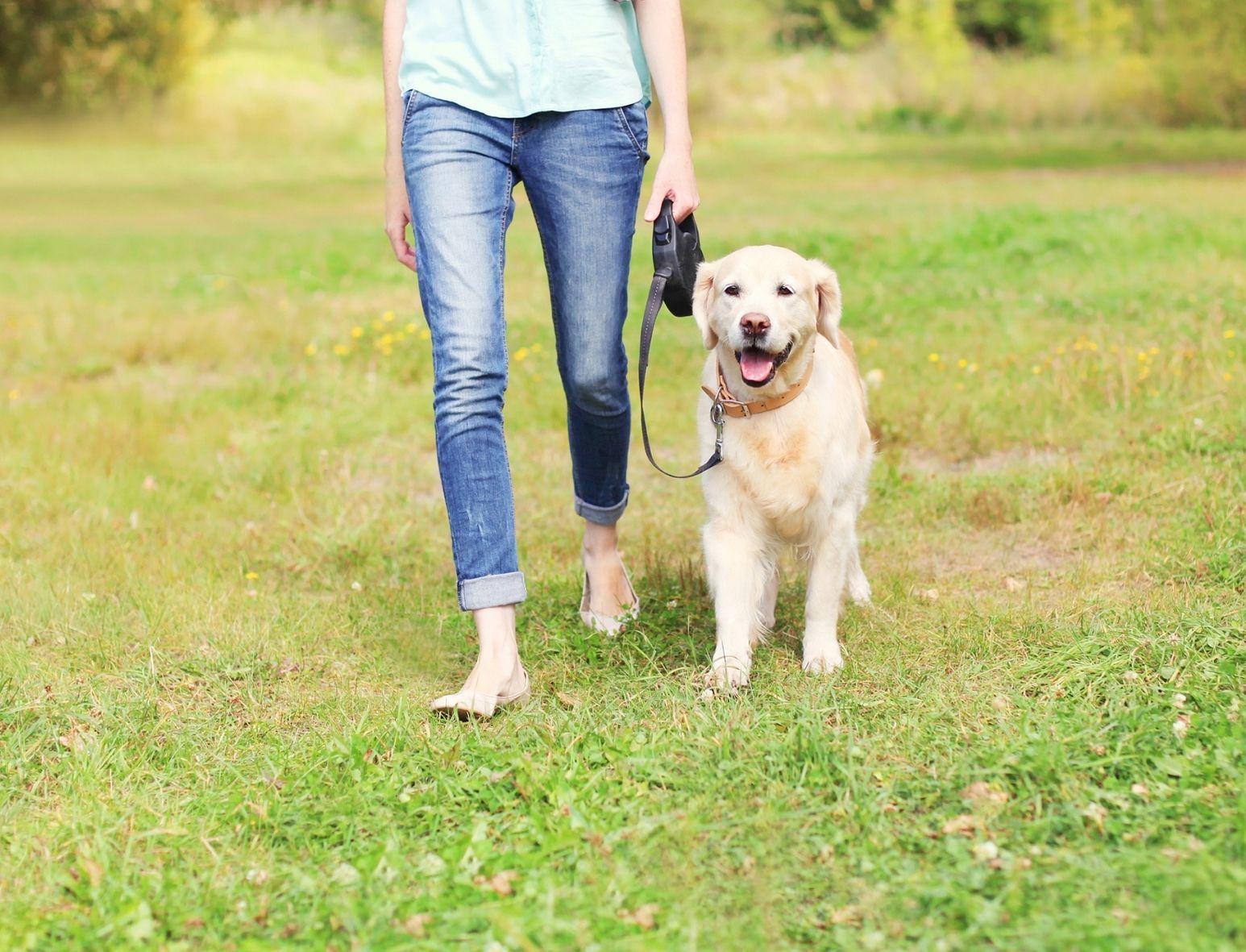 Как убрать за собакой экологично