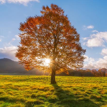 Как посадить дерево через интернет