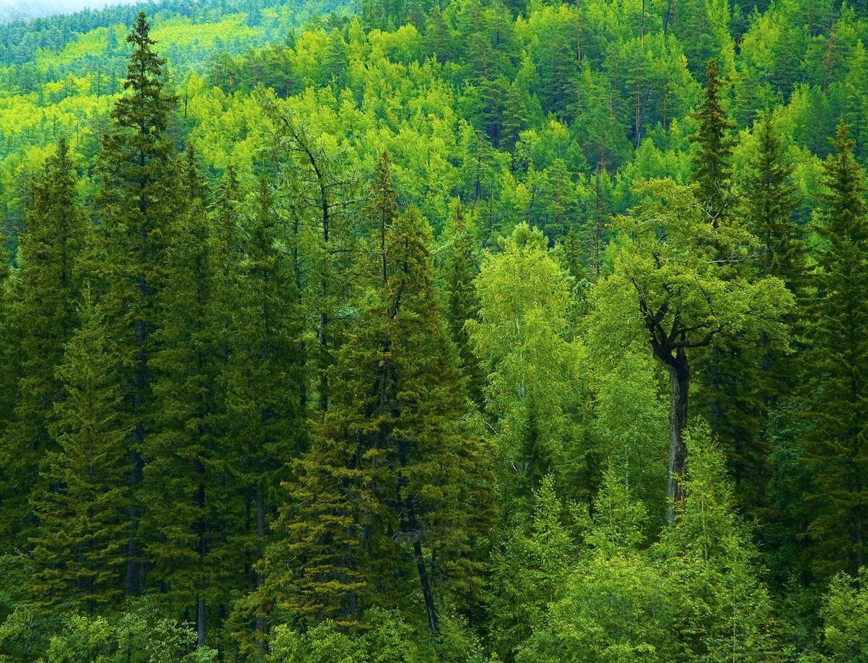 Стартовал конкурс грантов «Сохраняя лес, сохраняем климат»
