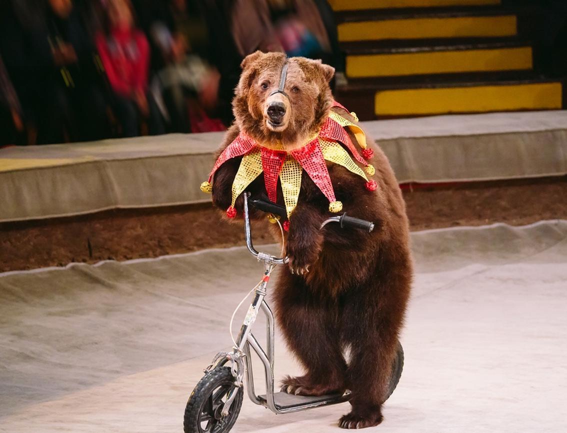 В Париже запретили цирк с животными