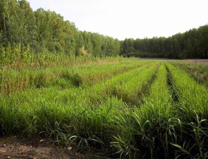 Завод по производству биоразлагаемой посуды построят в Новосибирске