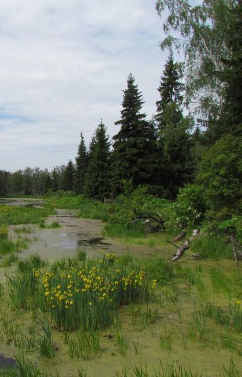 В национальном парке высадят более 40 тысяч саженцев