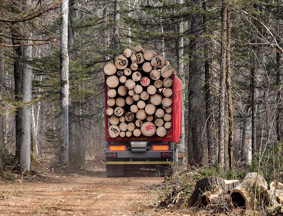 На круглом столе обсудят лесные пожары и незаконные вырубки