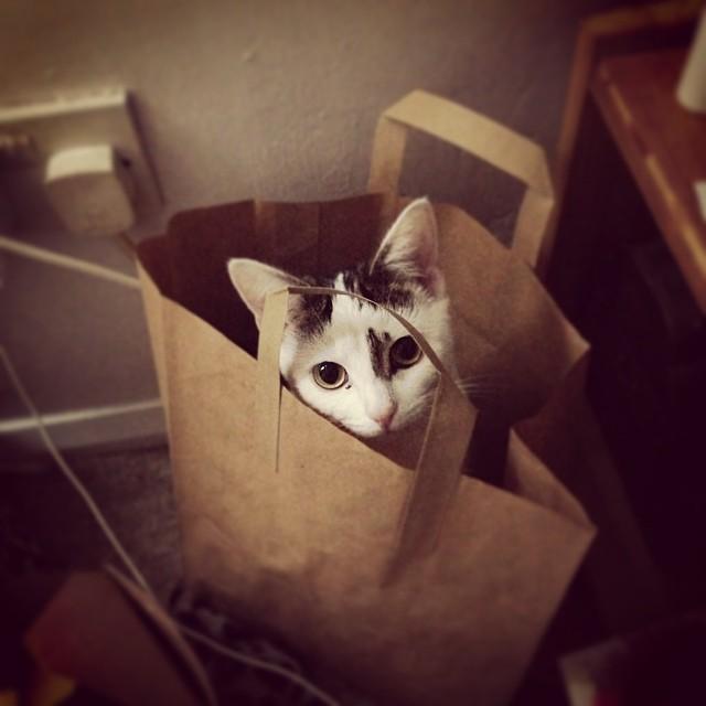 30 котиков из Instagram в экологичных бумажных пакетах