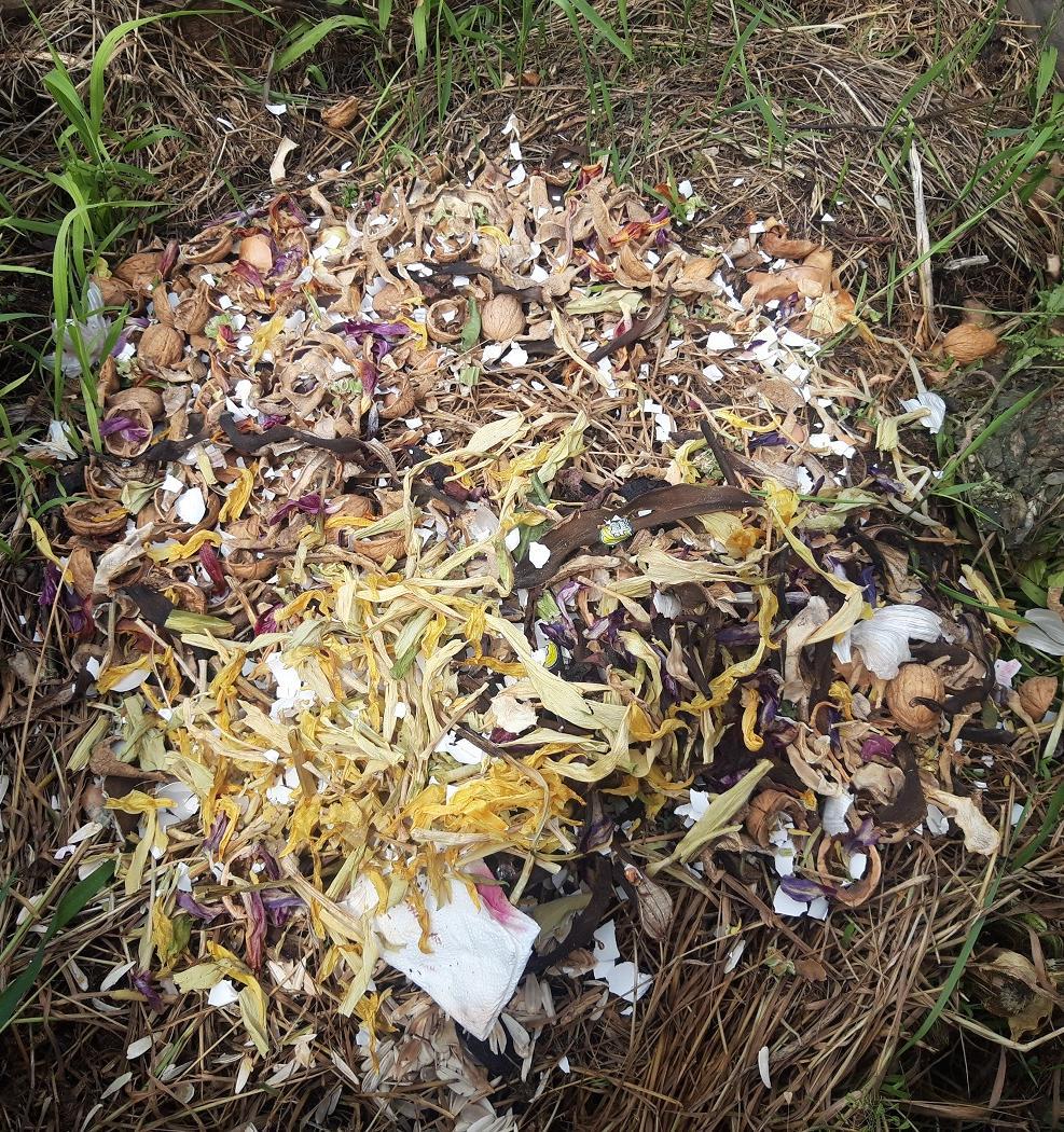 Как московский проект «Эковывоз» запустил сервис по вывозу пищевых отходов
