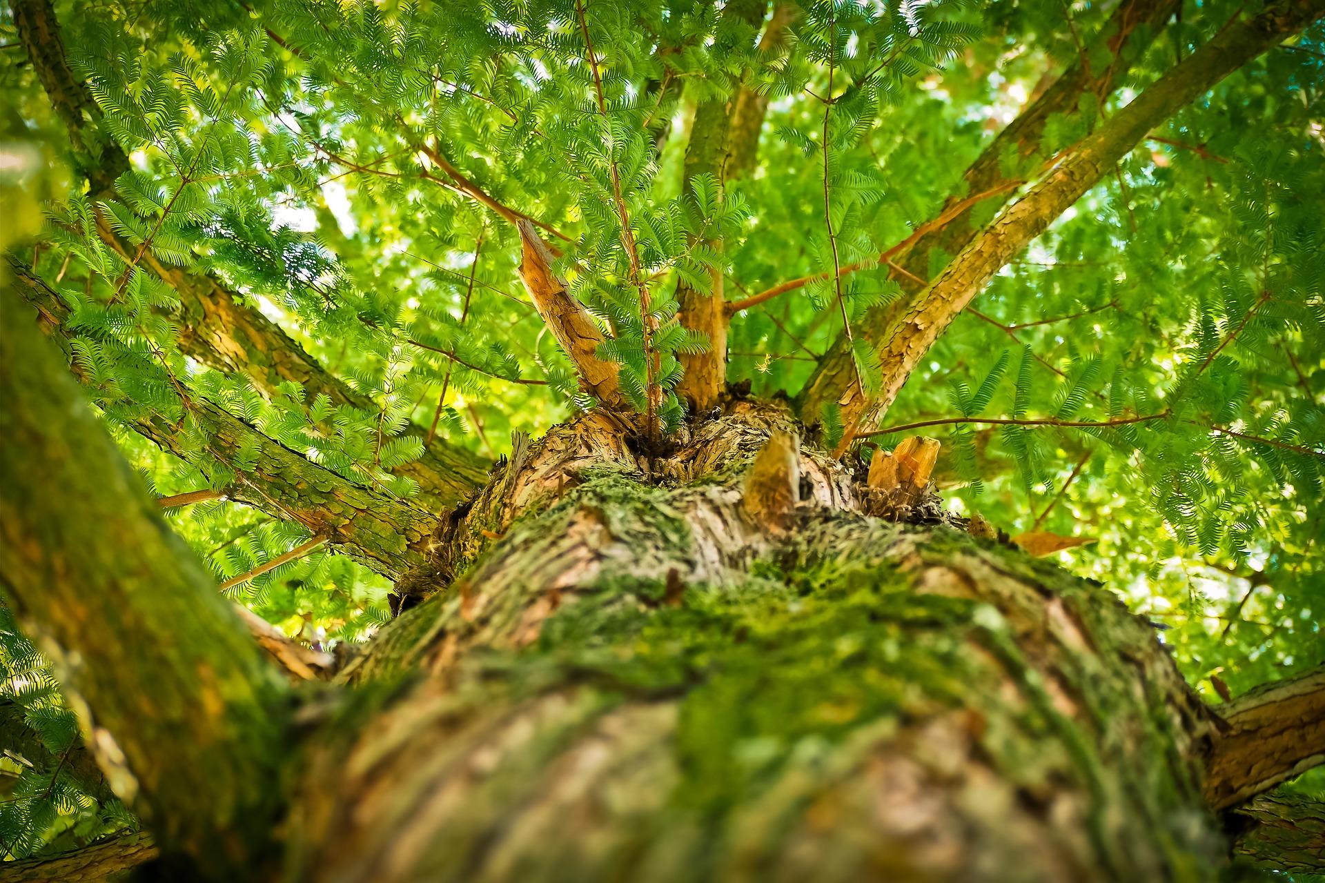 Как провести с пользой Международный день леса