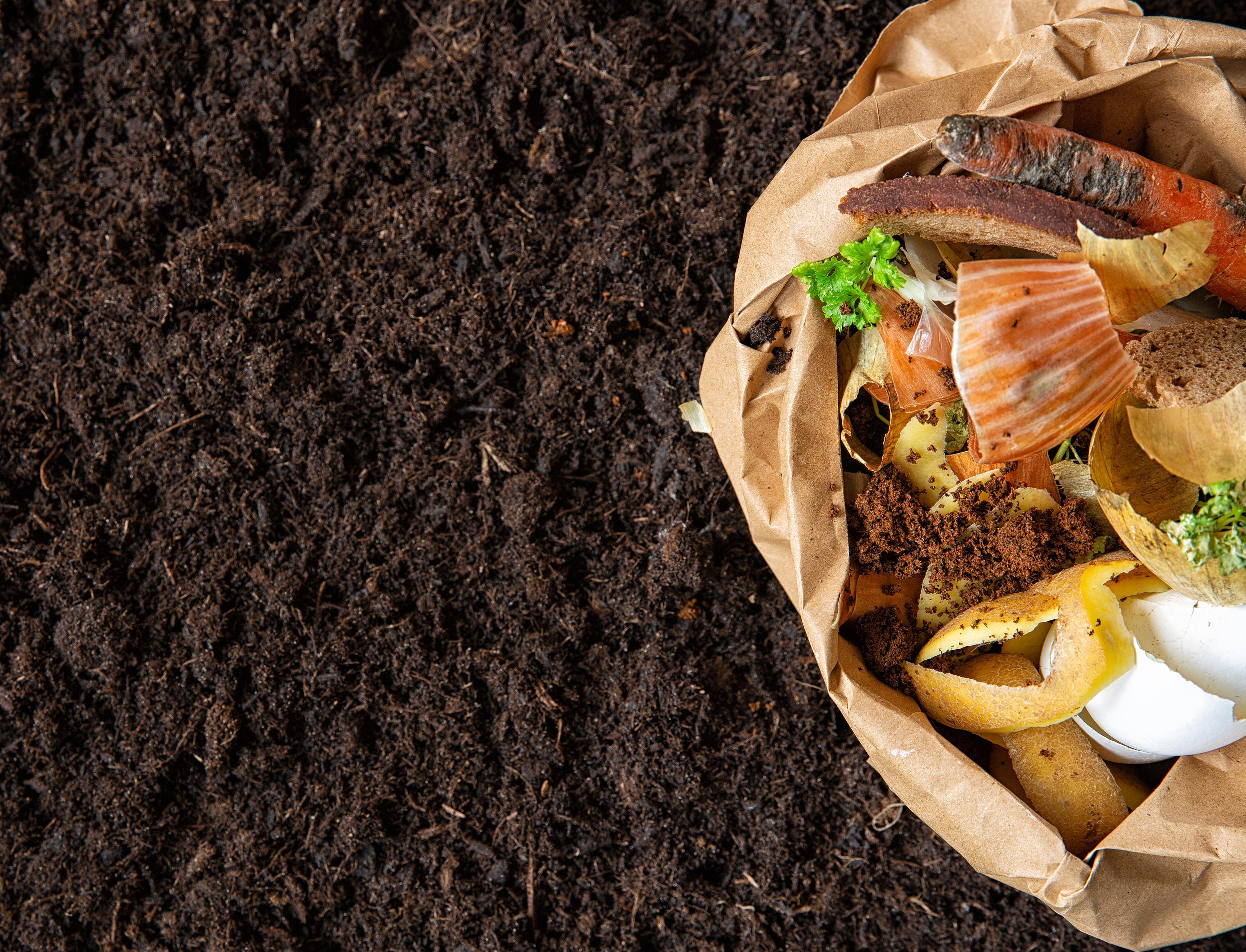 Как экоактивистка из Казани собрала две тонны органических отходов