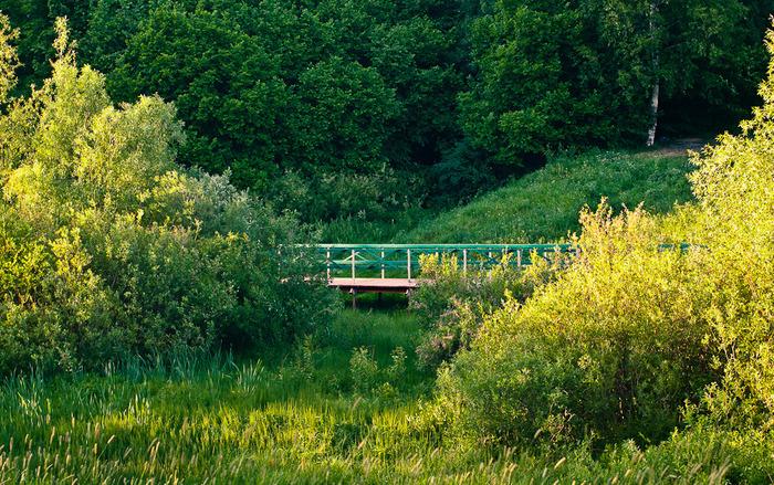 В «Теплом Стане» пройдет акция по посадке деревьев