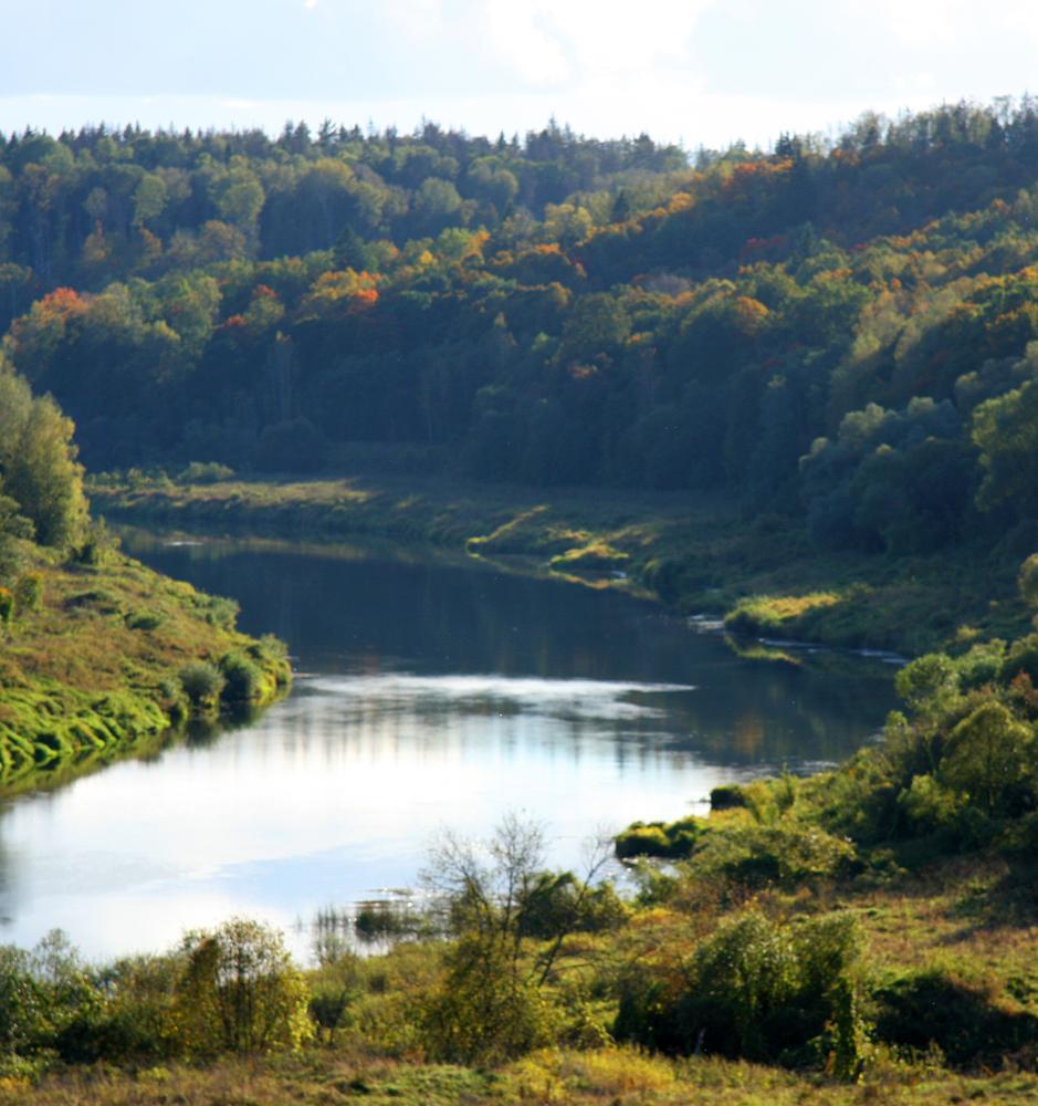 Всех желающих приглашают на посадки леса в национальный парк «Угра»