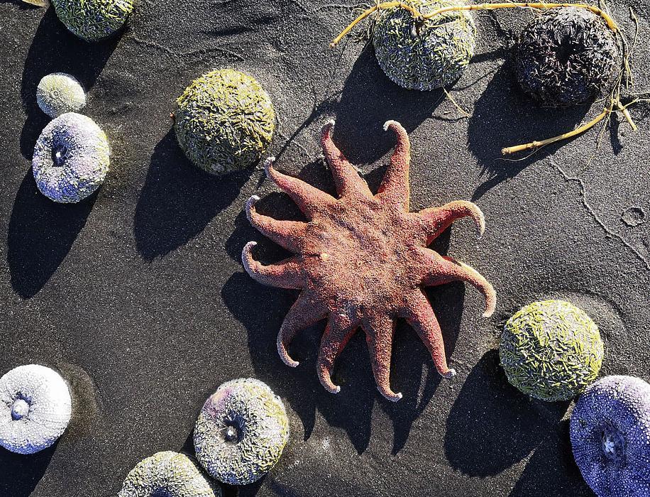 Эксперт РАН: гибель морских животных на Камчатке не может быть объяснена утечкой пестицидов с полигонов