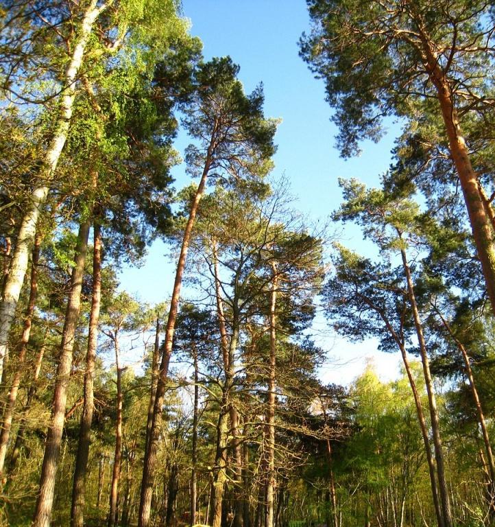 В Воронеже создадут карбоновый полигон на 3 тысячах га леса