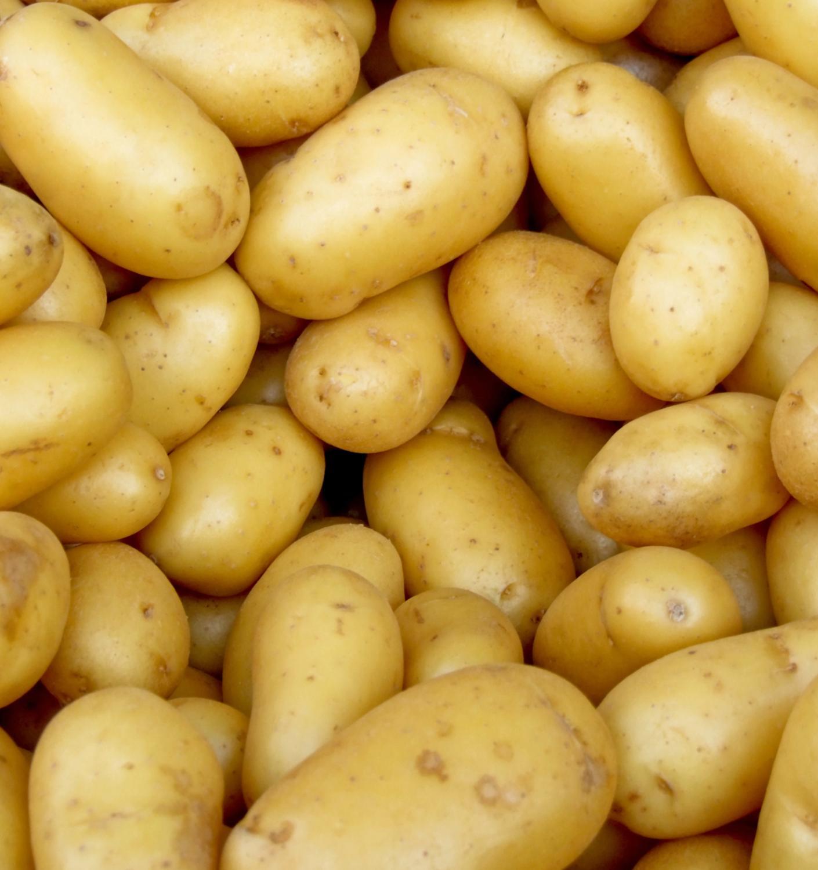 Томские ученые начали экологично прививать картофель