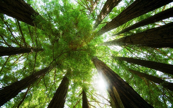 Редакция восстановит лес, вырубленный для создания журнала