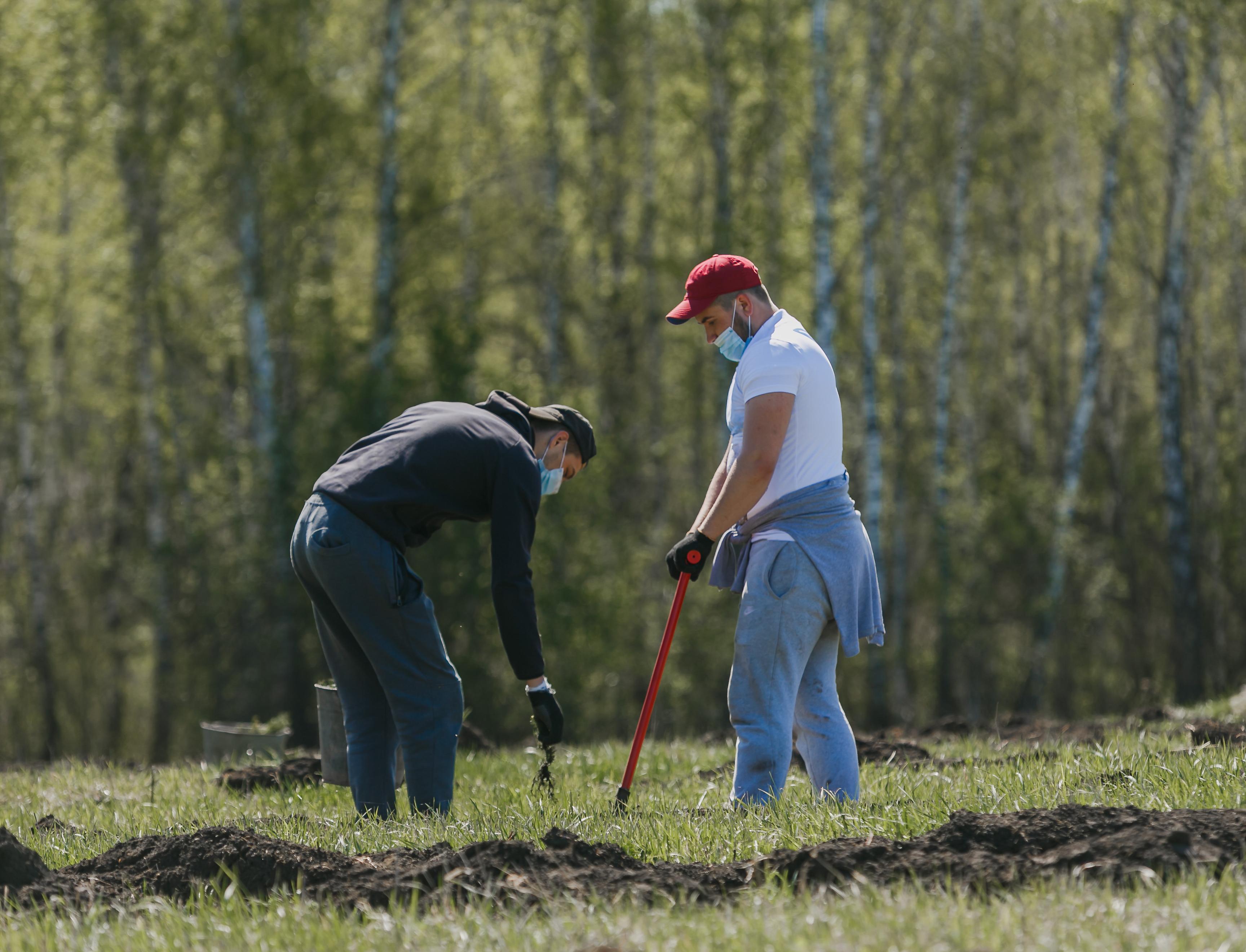 Планы весеннего сезона посадок деревьев волонтеры выполнили за одну неделю