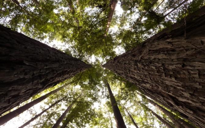 FSC подготовил онлайн-приложения на День леса