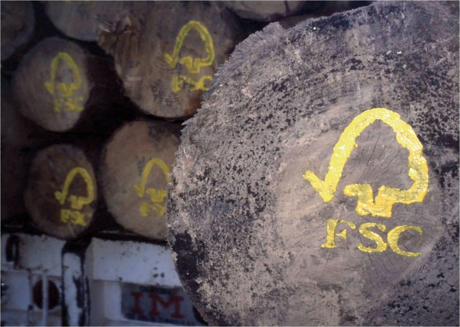 В России стартует новая акция по сохранению леса