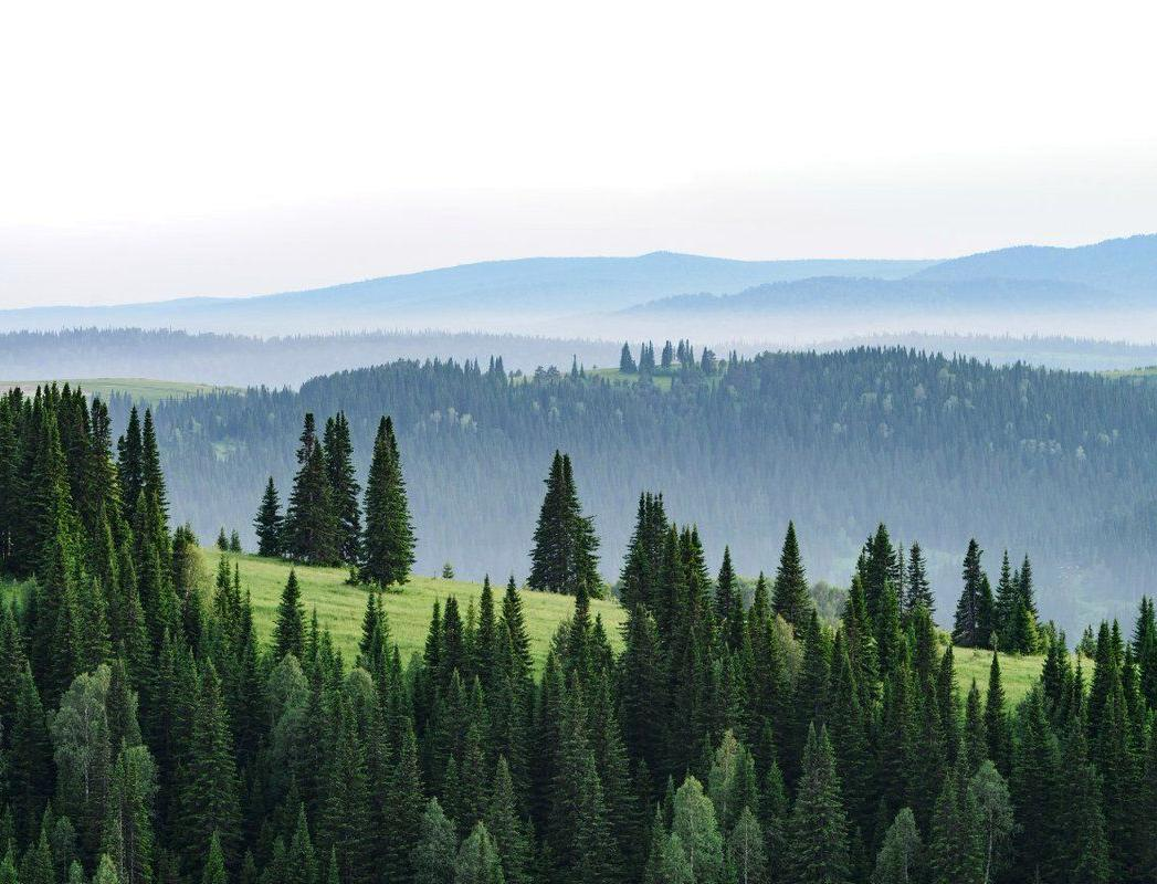 «Чистая Линия» и «Пятёрочка» помогут россиянам сохранять леса в режиме онлайн