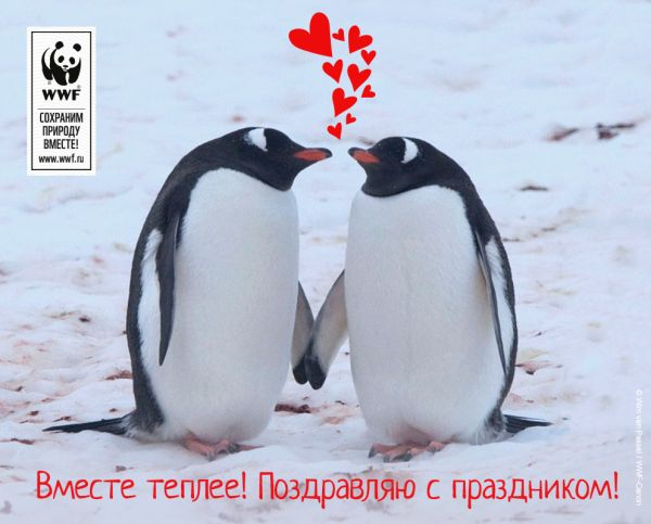 WWF приготовил экологичные валентинки ко Дню всех влюбленных