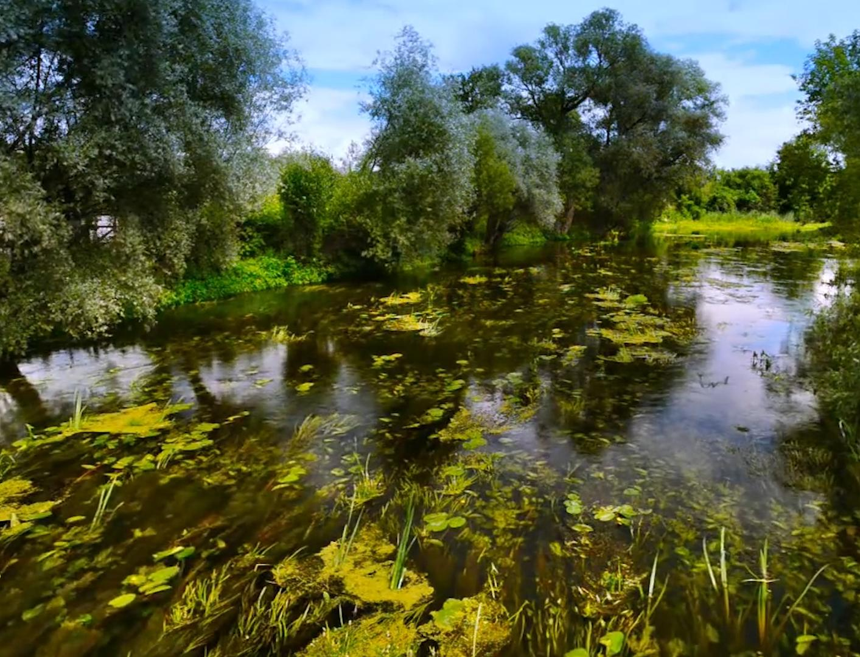 Эколог Георгий Каваносян: почему в России гибнут реки